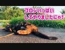 2021/07/18放送【107日目 北海道 釧路 夕方 あずにゃんぽ(猫散歩)】北海道全市町村制覇するまで帰れまてん! 猫と車中泊の旅 日本縦断【旅猫あずき~保護猫から旅猫へ~】