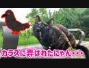 2021/07/19放送【108日目 北海道 釧路 早朝 あずにゃんぽ(猫散歩)】北海道全市町村制覇するまで帰れまてん! 猫と車中泊の旅 日本縦断【旅猫あずき~保護猫から旅猫へ~】