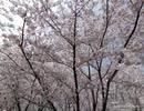 上海魯迅公園とその周辺地域
