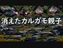 0719B【消えたカルガモ親子】雛鳥と鯉の大群。コイが丸呑みお菓子。カラスの捕食。カワラヒワの鳴き声。 鶴見川水系恩田川でコンデジ野鳥撮影 #身近な生き物語 #カルガモ親子 #コンデジ