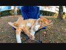 何故か公園でアウトドア用の椅子で寝ている野良猫
