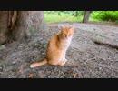 木陰に茶トラ猫がいたので頭を撫でると喜んで木に身体を擦りつけてカワイイ