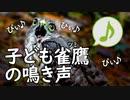 日本最小の鷹の子供の鳴き声
