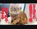 コワモテ元ボス猫、スネてうどんをこねる