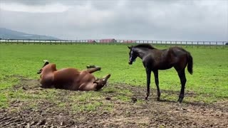 メジロ家と見る仔馬たちに大人気なメジロ