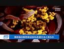 中国で炭疽病患者を1人確認・2011年以降で初