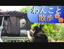 【早朝開園に行こう】わんこと散歩 #国営武蔵丘陵森林公園