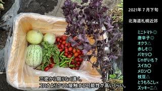 ガバガバ開拓記Part2 家庭菜園 (おまけ