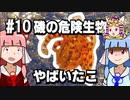 【琴葉姉妹の磯遊び】#10磯の危険生物 やばいたこ編【VOICEROID解説】