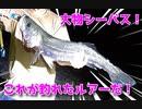 【ルアー紹介】大物シーバスゲット!【ショアジグ】