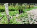 2021/09/05放送【156日目 北海道 弟子屈町 早朝 あずにゃんぽ(猫散歩)】北海道全市町村制覇するまで帰れまてん! 猫と車中泊の旅 日本縦断【旅猫あずき~保護猫から旅猫へ~】