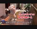水浴びが嫌いなオウムのまぬけな威嚇ポーズ◆#3◆羽夢蔵◆Moluccan Cockatoo