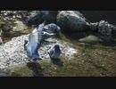 鳩の水浴び♥