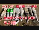 #2 大漁!エギングでアオリイカ8杯、タコ1匹釣れます!福井県常神半島!【釣り動画】