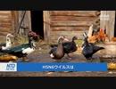 死亡率60%! 中国の広東省でH5N6型 鳥インフルエンザのヒトへの感染を確認!
