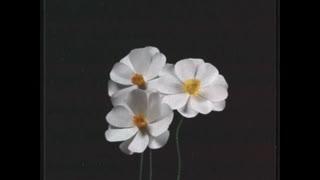 再生 ft.初音ミク