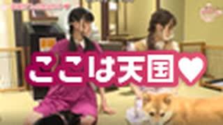 【#アグリー】大西亜玖璃の「あなたにアグリー♥」ゲスト:首藤志奈(豆柴カフェ後編)