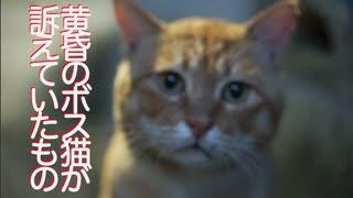 武闘派ボス猫、夕闇の中で人間に訴える