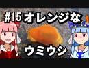 【琴葉姉妹の磯遊び】#15オレンジなウミウシ【VOICEROID解説】