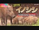 [サイエンスZERO]【害獣】イノシシ 日本各地で激増中! | 被害を激減させる科学的対策とは? | NHK