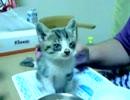 ヌコモコ動画#1 猫を保護したよ。