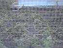 30分間ずっとウチの畑のターン