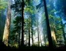森にグラハムが介入