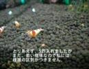 小型水槽でレッドビーシュリンプを飼う part2 ~エビ投入編~