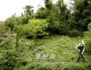 楽しい草刈り thumbnail