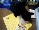 黒猫のレキ 1周年記念 カツブシ