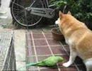 インコと柴犬(6月29日)