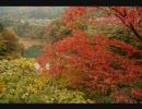 庄川峡の紅葉撮ってきた