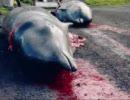 デンマークの捕鯨