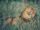 マクロスF-ライオンを普通に歌ってみた