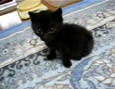 黒猫 来たばかりの小さい頃