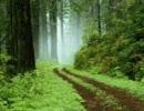 自然の音~森の昼下がり~作業用BGM(30