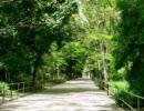 自然の音~夏のセミの声~作業用BGM(1分40秒)