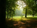 【癒しBGM】FOREST PIANO