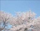 【UTAU】和音マコさんにオリジナル曲を歌ってもらった【石ころのうた】