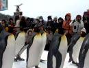 旭山動物園 ペンギンの行進