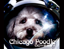 Chicago Poodle 「ODYSSEY」