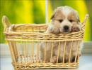 【犬と一緒に】 犬画像 【フンッ!フンッ!フンッ!】