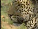 アフリカ三大ネコ類の力関係