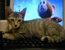 「キーボードに邪魔しに来る子猫」 ■15万
