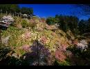 2009年桜の写真集