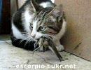 ネコが鳥をモグモグしてます。