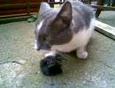 猫がネズミをモグモグしてます。3