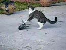 猫、鳥を捕まえる。