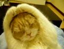 どうしても手を頭の後ろにやりたい猫