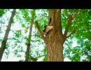 木登りキャット